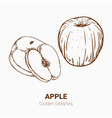 set of drawing apples golden delicious elements vector image vector image
