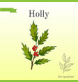 holly tree branch with green leaves and red vector image vector image