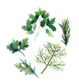 Water color herbs Fennel parsley rosemary and arug vector image