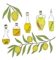 Branch olive tree with olives and bottle of oil on vector image vector image