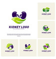 set of kidney with leaf logo design concept vector image