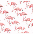 exotic pink flamingo birds stride seamless pattern vector image