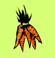 bunch of carrots grunge icon vector image vector image