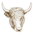 engraving yak vector image vector image