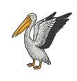 pelican bird sketch vector image vector image