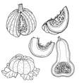 pumpkin drawing vector image vector image