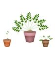 Three Evergreen Plants in Ceramic Flower Pots vector image vector image