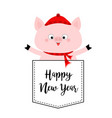happy new year pig face head in pocket red vector image