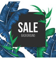 sale promo banner background with exotic plants vector image vector image