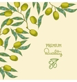 Background with Olive branch vector image vector image