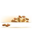 Banner with acorns vector image vector image