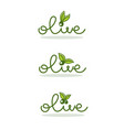 light and simple olive oil logo with doodle vector image