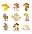 mashrooms set vector image