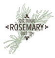 rosemary isolated icon with lettering spice and vector image