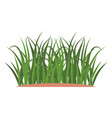 bunches of green grass on an earthen mound vector image vector image
