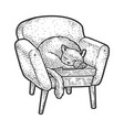 cat on armchair sketch vector image vector image