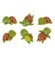 cute cartoon smiling turtles vector image