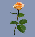 flower painted rose of peach color on the stem vector image vector image