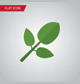 isolated hickory flat icon foliage element vector image vector image