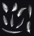 set bird feather on transparentfowl fur quill vector image