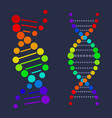 dna deoxyribonucleic acid chain nucleotides poster vector image vector image