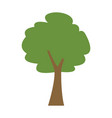 green tree forest foliage natural ecology vector image vector image