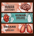 Human organ anatomy sketch banner with body parts