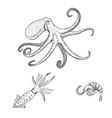 octopus vulgaris squid shrimp sea wildlife vector image