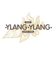 ylang ylang spice and herb shop isolated icon with vector image