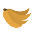 bunch of bananas fruit fresh natural vector image
