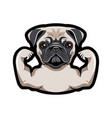 pug dog with musculs vector image vector image