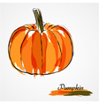 Pumpkin fruit vector image