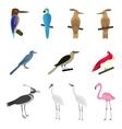 Set of beautiful birds vector image vector image