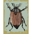 vintage background with beetle vector image vector image