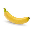 yellow banana isolated on white background vector image