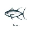 tuna fish sketch in drawn vector image vector image