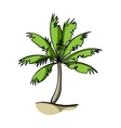 Palm tree icon in cartoon style isolated on white vector image