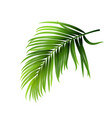coconut tropical palm green leaves branch vector image vector image