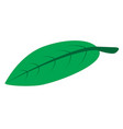 green leaf on white background green leaf icon vector image