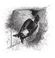 house martin vintage vector image vector image