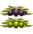 Two Compositions of Olives vector image