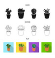 isolated object of cactus and pot symbol set of vector image vector image