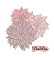pencil sketch hand drawn set dahlia flowers vector image vector image