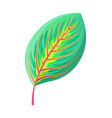 rubber fig tree leaf tropical vector image