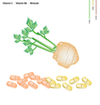 Celery Root with Vitamin C B6 and Minerals vector image