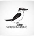 collared kingfishertodiramphus chloris isolated vector image vector image