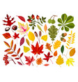 bright autumn leaves and ripe nuts isolated vector image