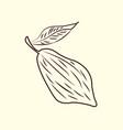 cocoa nut logo vector image