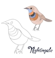 Educational game coloring book nightingale bird vector image vector image