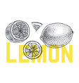 lemon or lime hand drawn sketch vintage vector image vector image